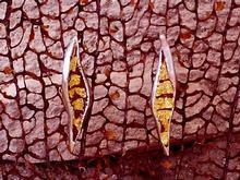 P. ARRACADES de 2,5 x 1,7 cms.
